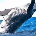 クジラの大きさはどれくらい?比較してみよう!