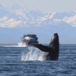 クジラはどれくらい深く潜れるの?最大潜水深度は?