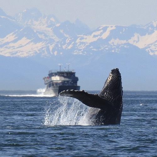 鯨 足 骨格