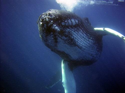 鯨 鯨油 ペリー