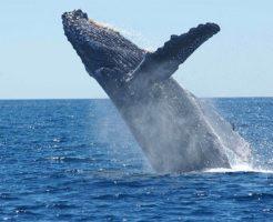 クジラ 捕獲量 世界