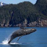 クジラの体重の測り方!