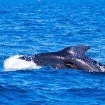 クジラの子供の育て方って?母乳で育てる?
