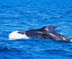 クジラ 子ども 育て方