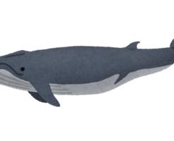 ナガスクジラ 味