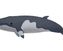 ミンククジラ 名前 由来 英語 スペル