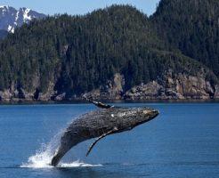 クジラ 骨 脊椎