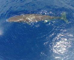 クジラ コロ