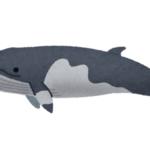 ミンククジラの名前の由来や英語のスペルについて!